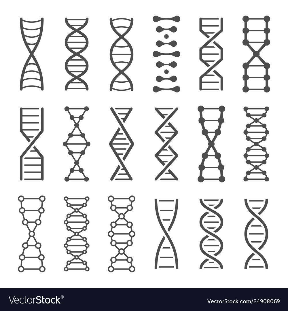 Dna spiral icon human genetics code genom model