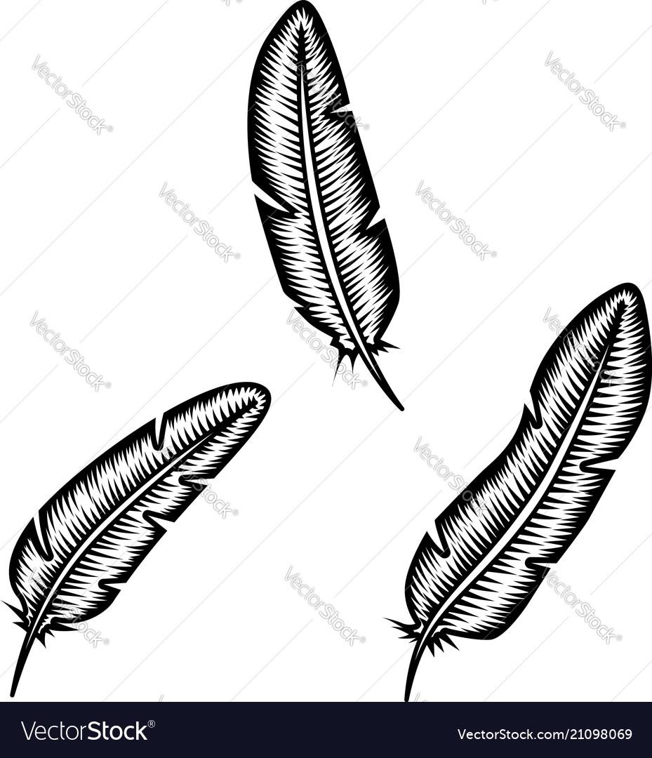Set feather on white background design element