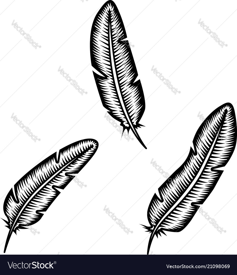 Set of feather on white background design element