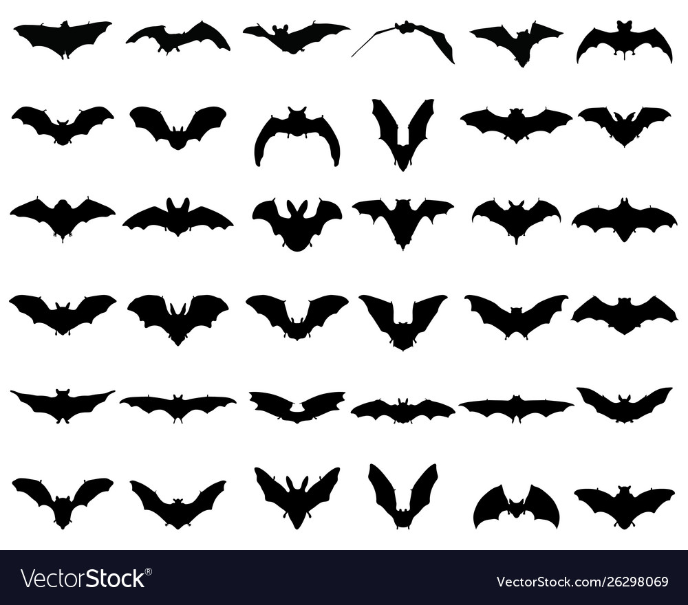 Silhouettes bats