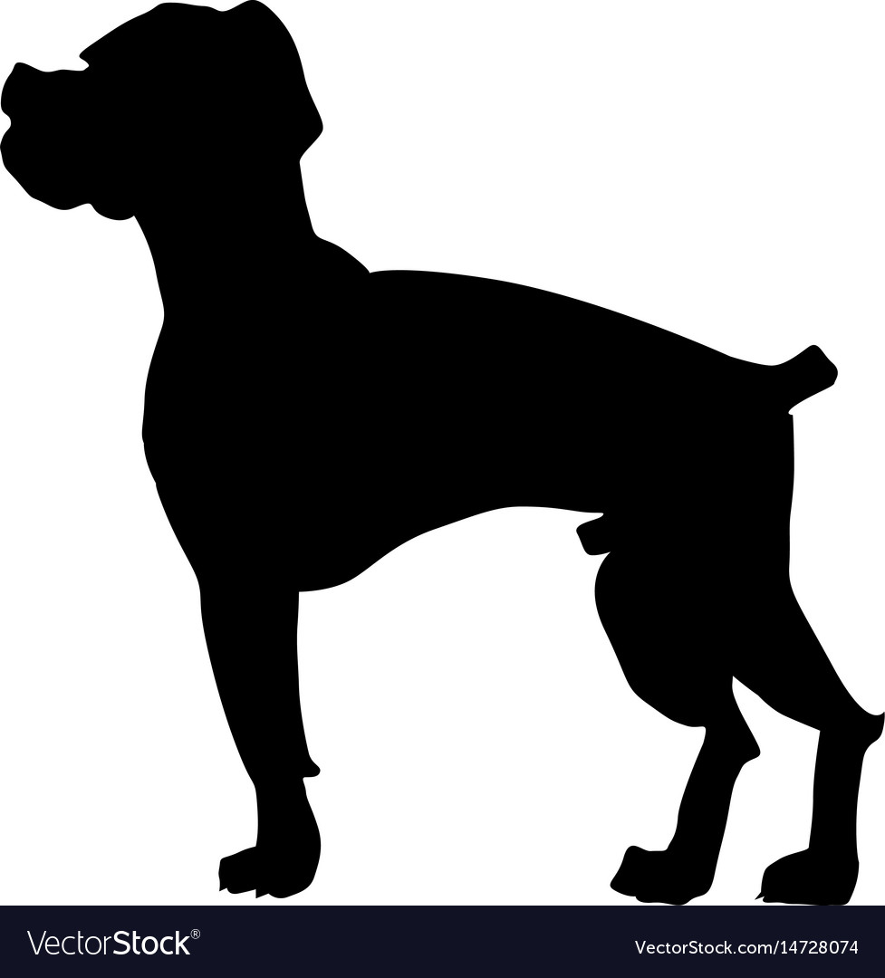 Boxer dog vector image