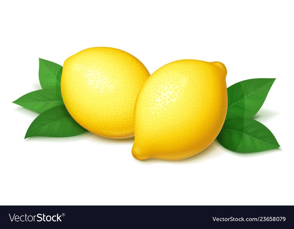 Ripe juicy lemon with green