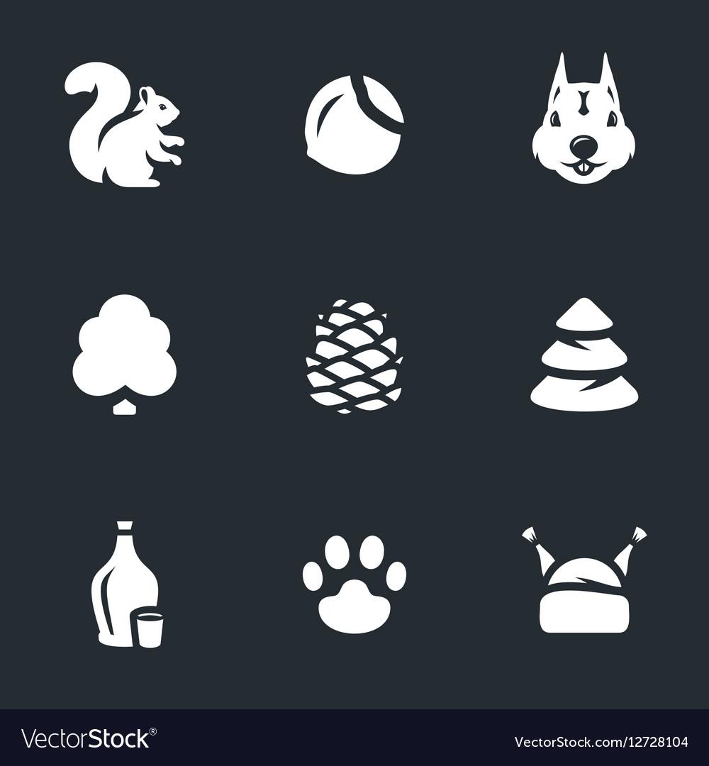 Set of Squirrel Life vector image