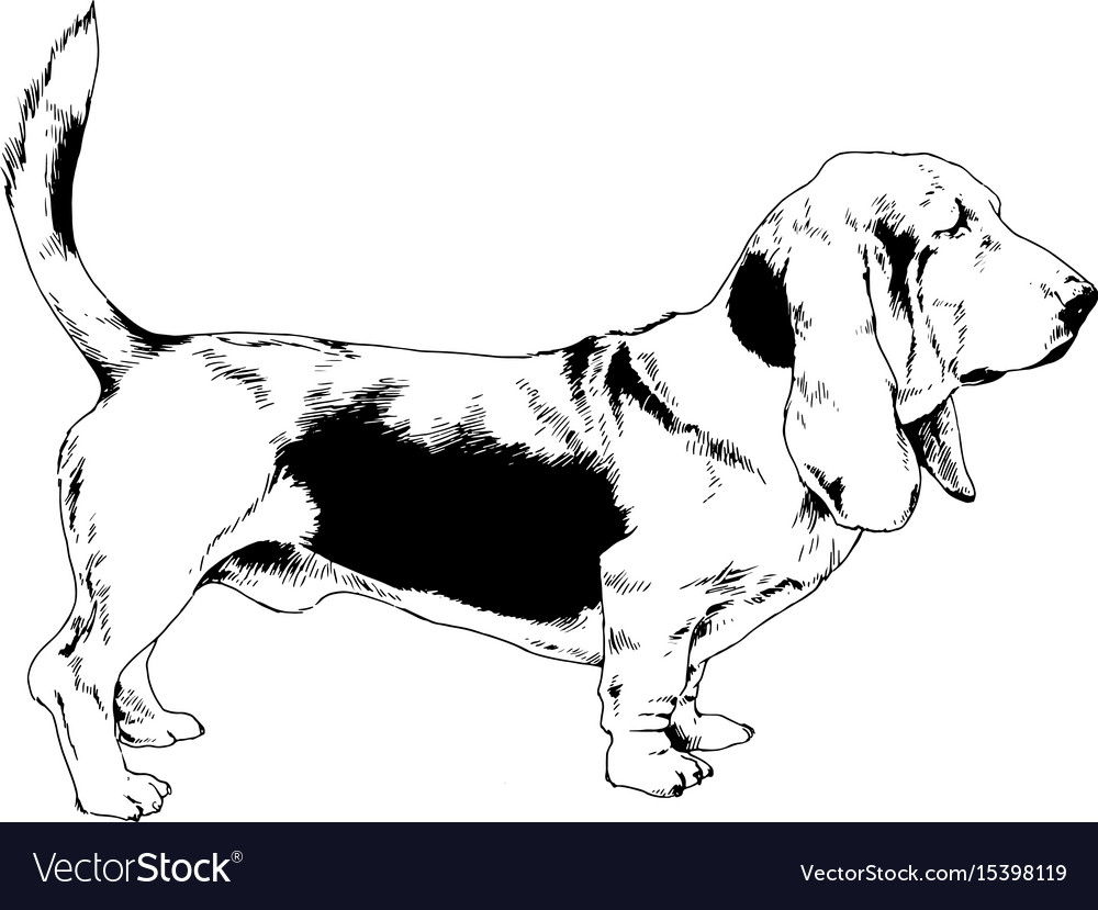 Dog drawn with ink on white background