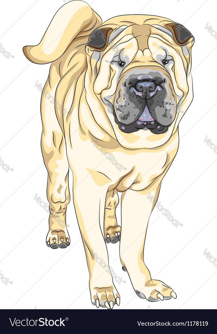 Sketch yellow gun dog breed Chinese Shar Pei vector image