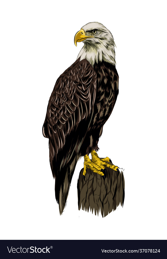 Bald eagle from a splash watercolor colored