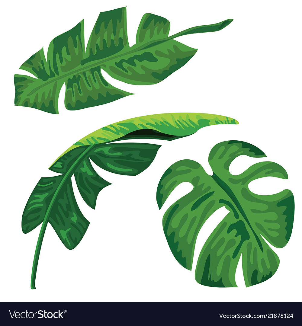 Palm Tropical Leaves Set On White Background Vector Image Ferns, rubber fig trees and areca no matter how you choose to feature these stunning tropical leaves in your home, there's no doubt that you'll be able to transform your living room into a. vectorstock