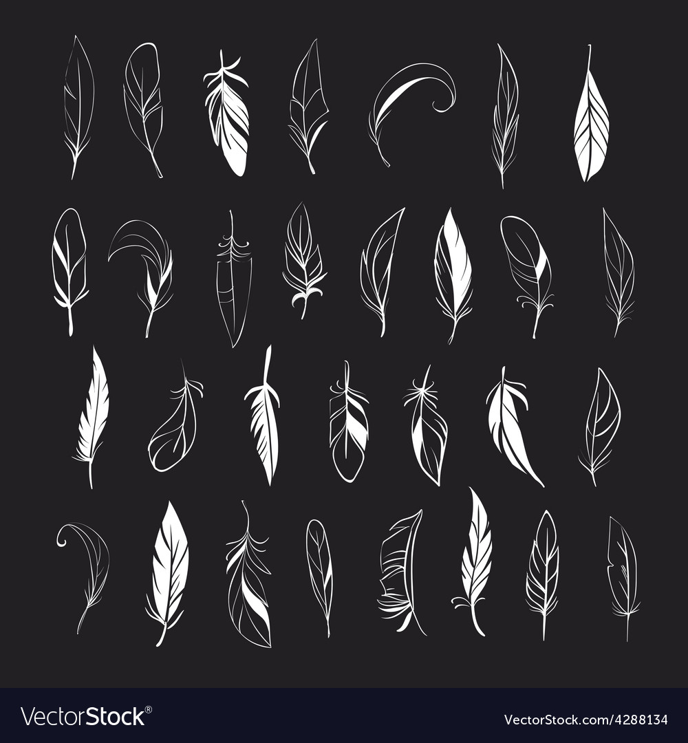 Set of different hand drawn feathers on