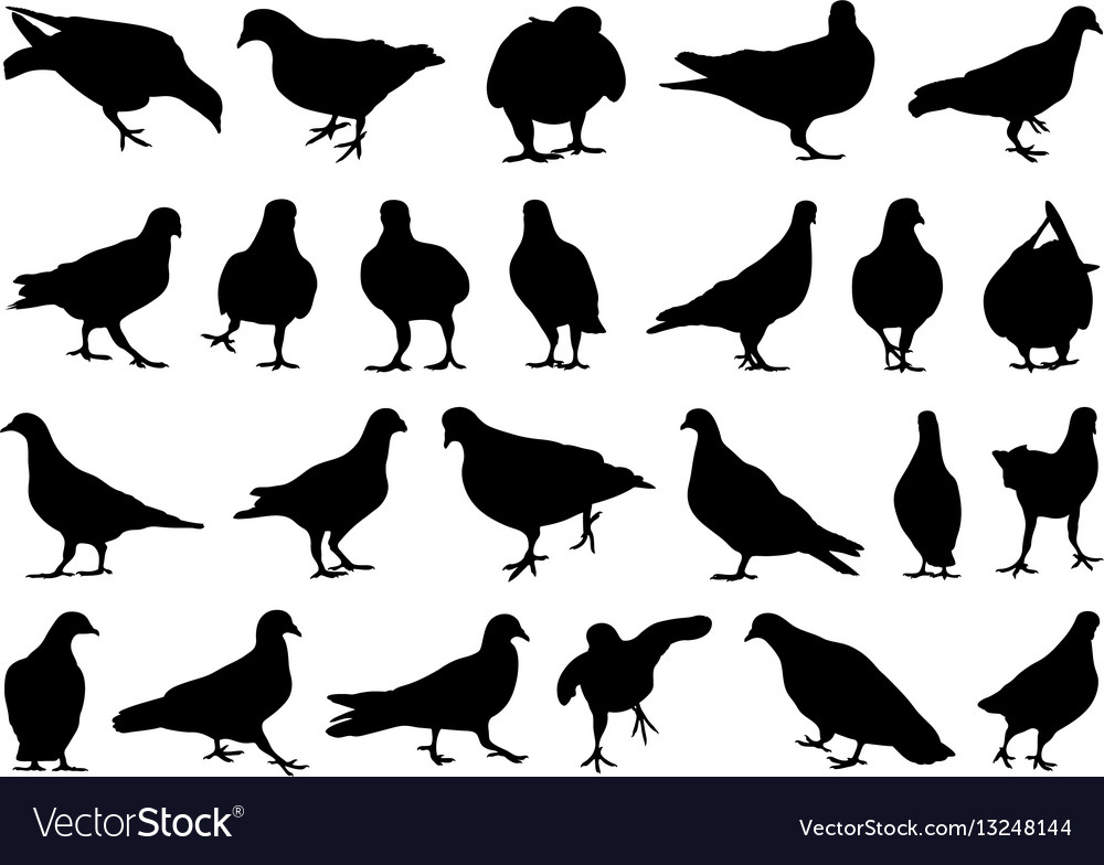 Set of different doves