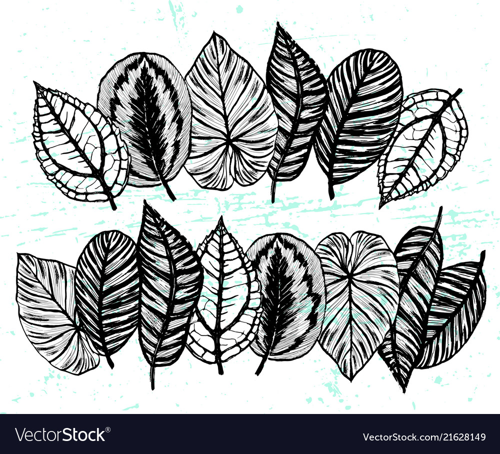 Borders with ink hand drawn exotic plants