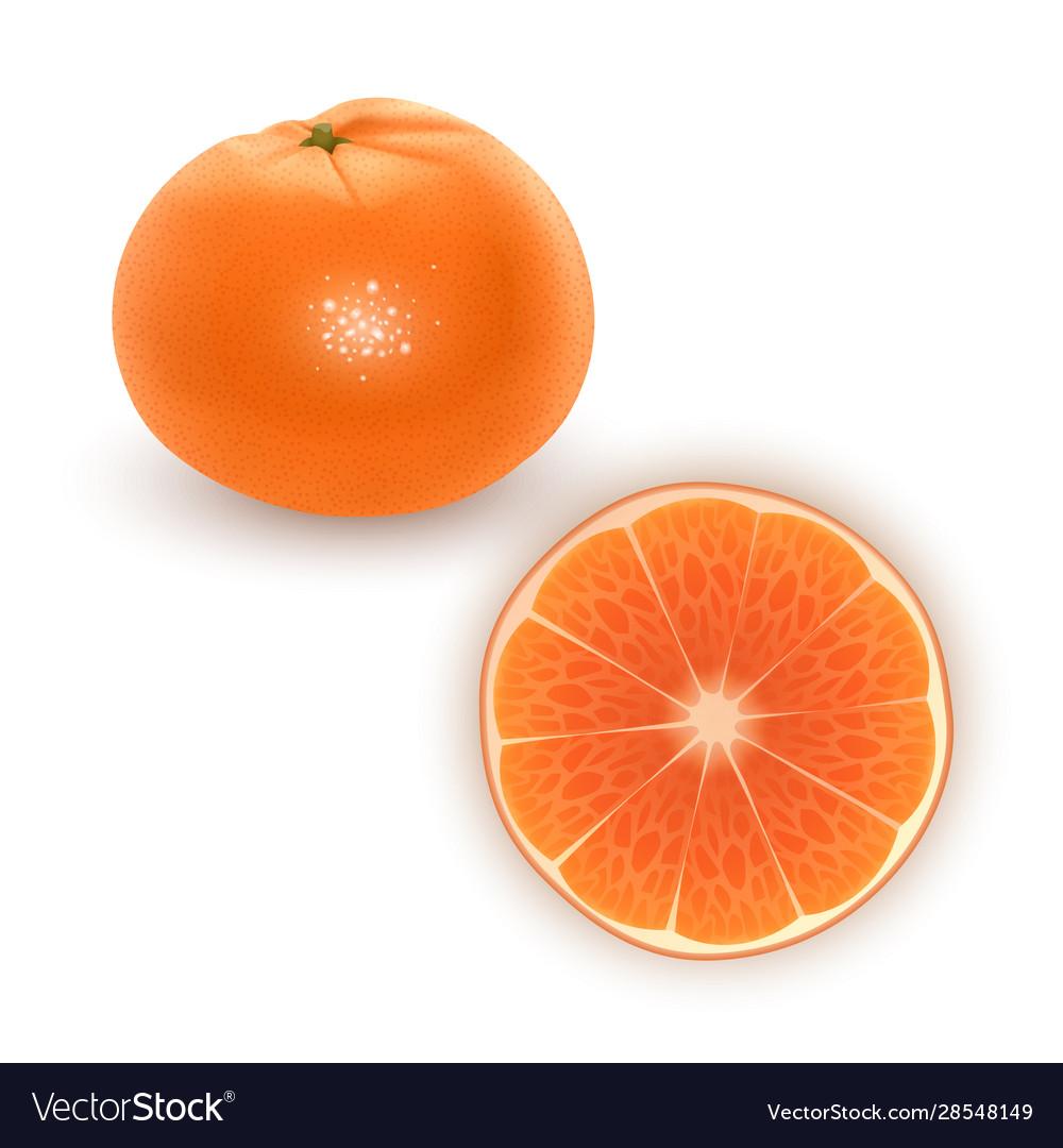 Bright set colorful segment juicy orange