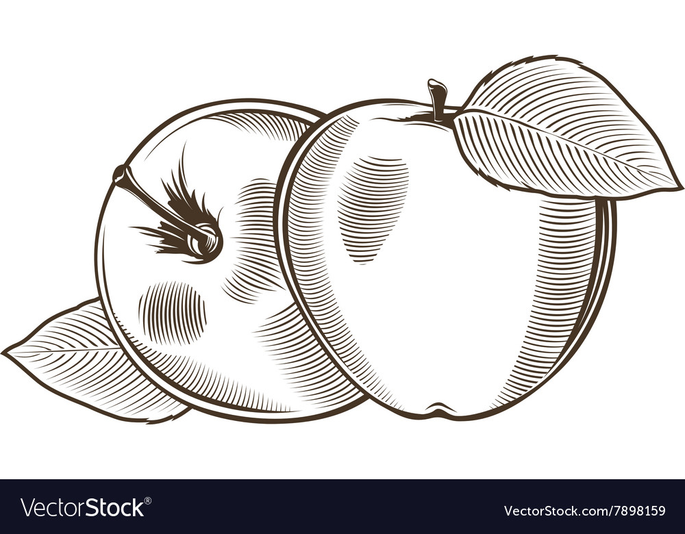 Apples in vintage style Line art