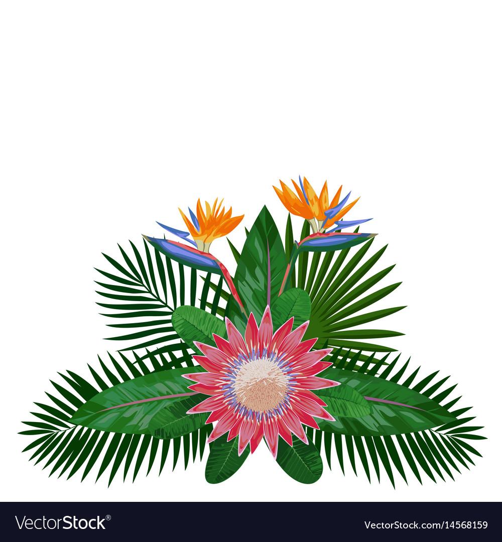 Tropical bouquet composition