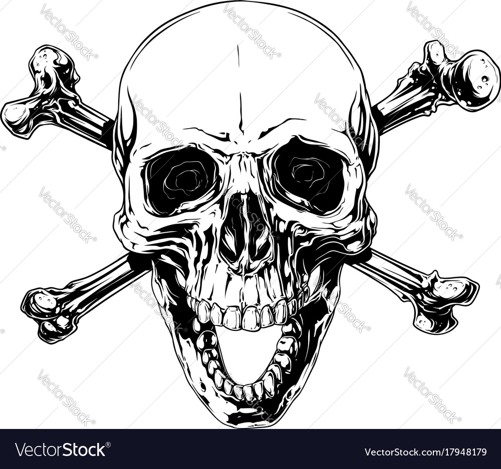 Graphic human skull with crossed bones vector image