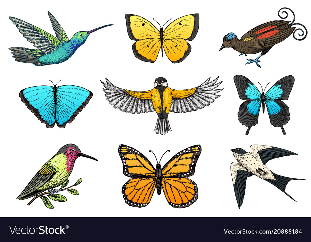 Collection of colorful butterfly insects and birds