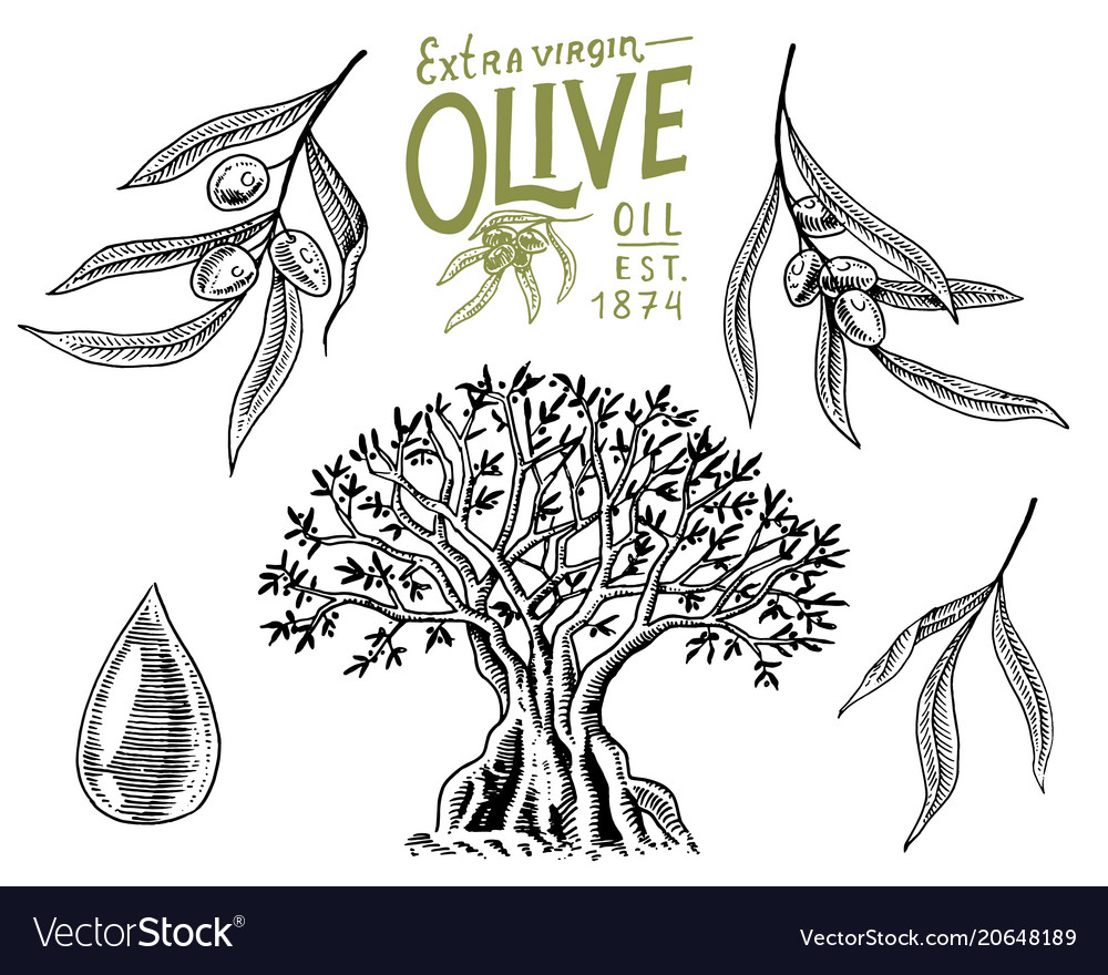 Set of olive oil and branch of trees organic