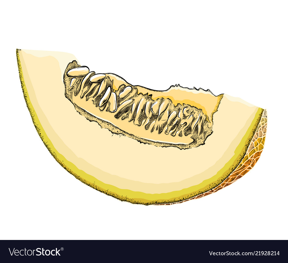 A hand-drawn sketch of a cut melon in color