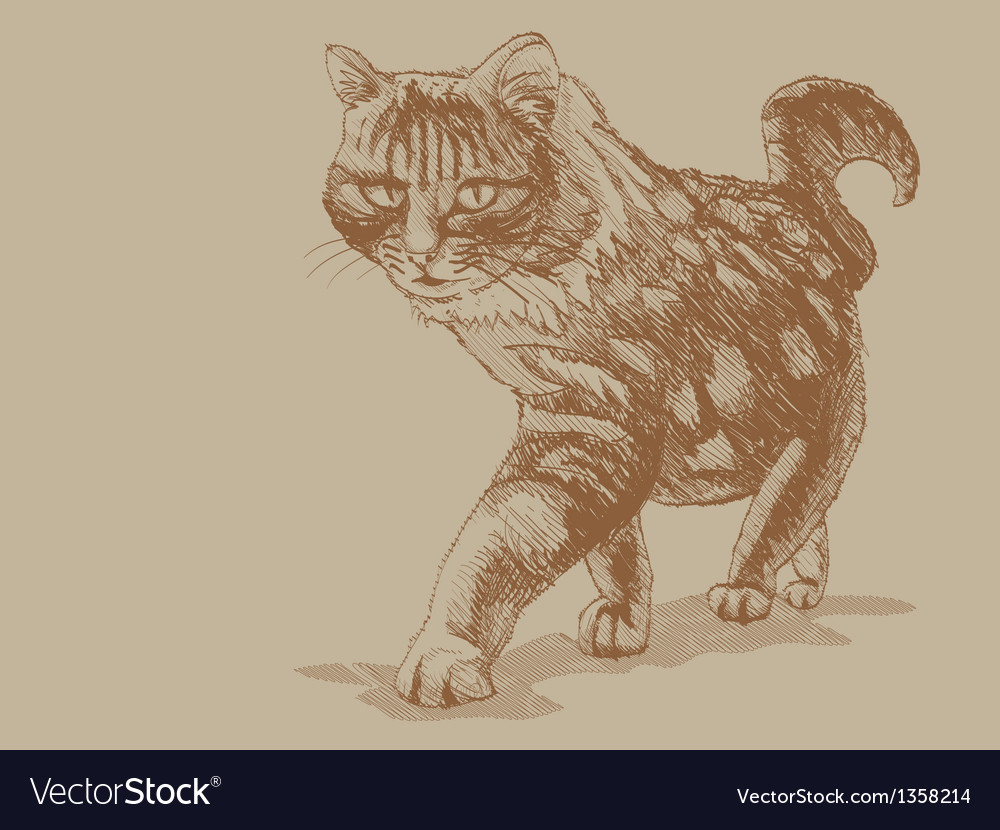 Approaching cat vector image