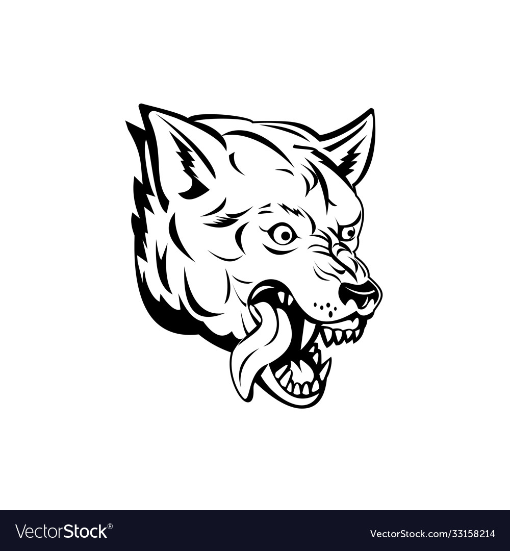 Head an aggressive and angry gray wolf grey