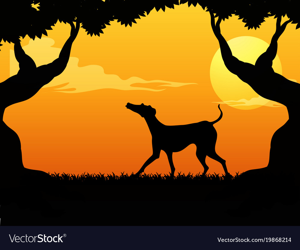 Silhouette scene with dog in the park at sunset