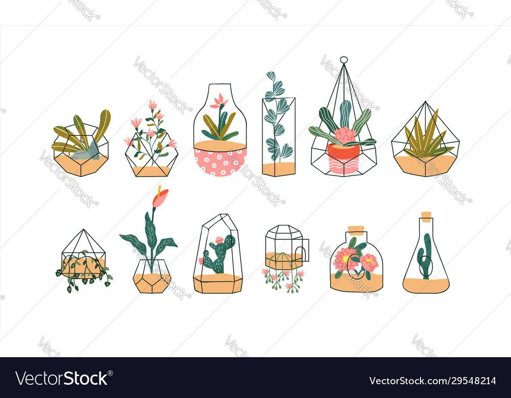 Terrarium plant set tropical houseplant flowers