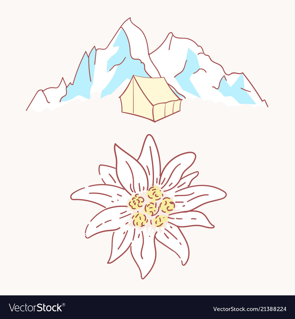 Edelweiss tent hiking mountains flower symbol