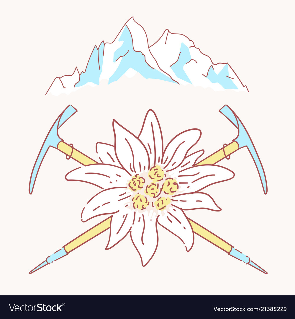 Edelweiss alpenstock mountains flower symbol