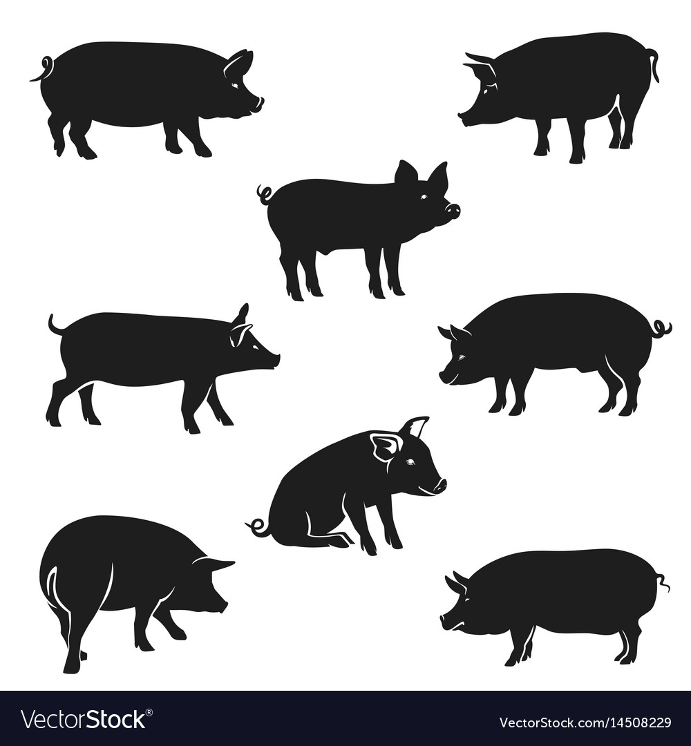 Quality silhouettes pigs black vector image