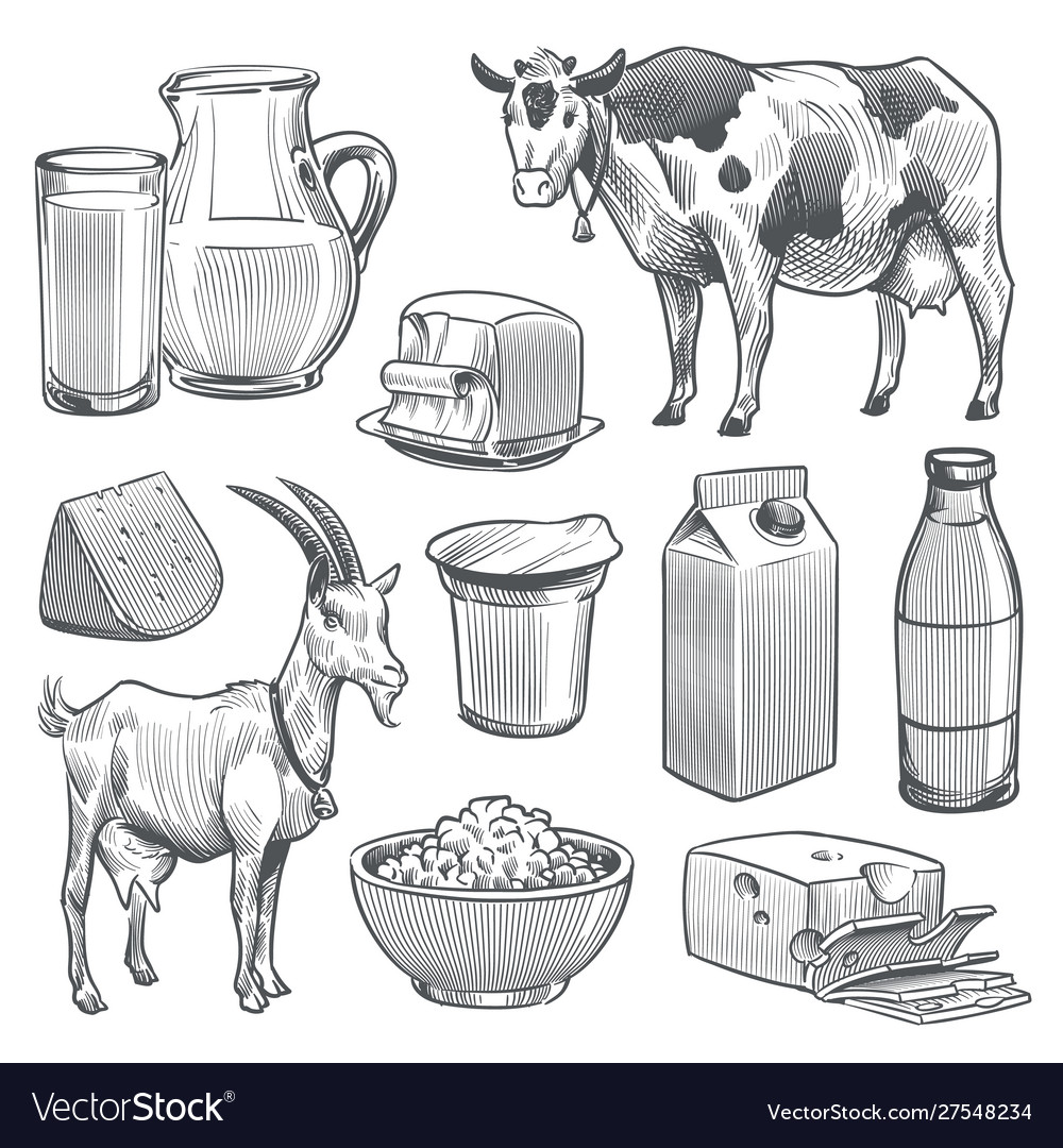 Hand drawn dairy products farm cow and goat milk