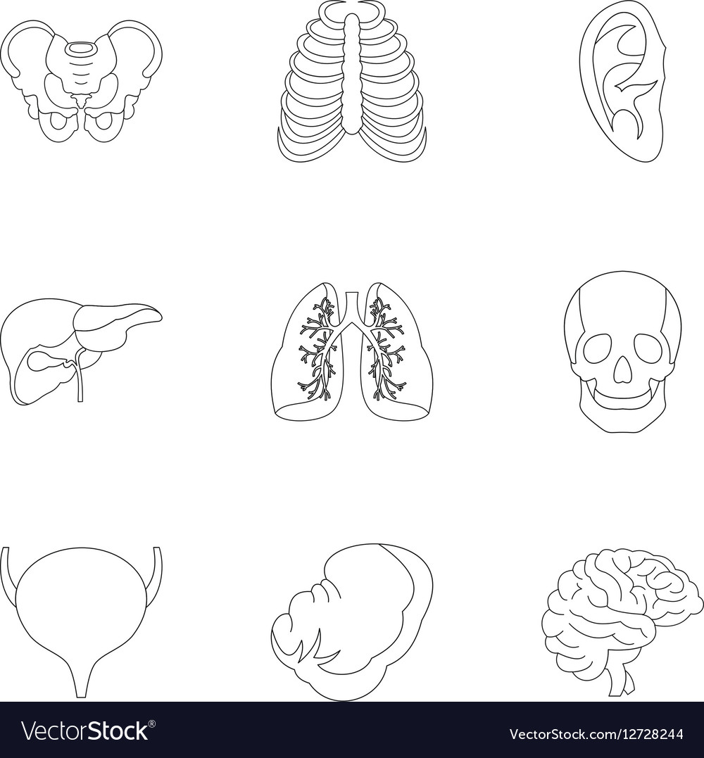Internal organs icons set outline style