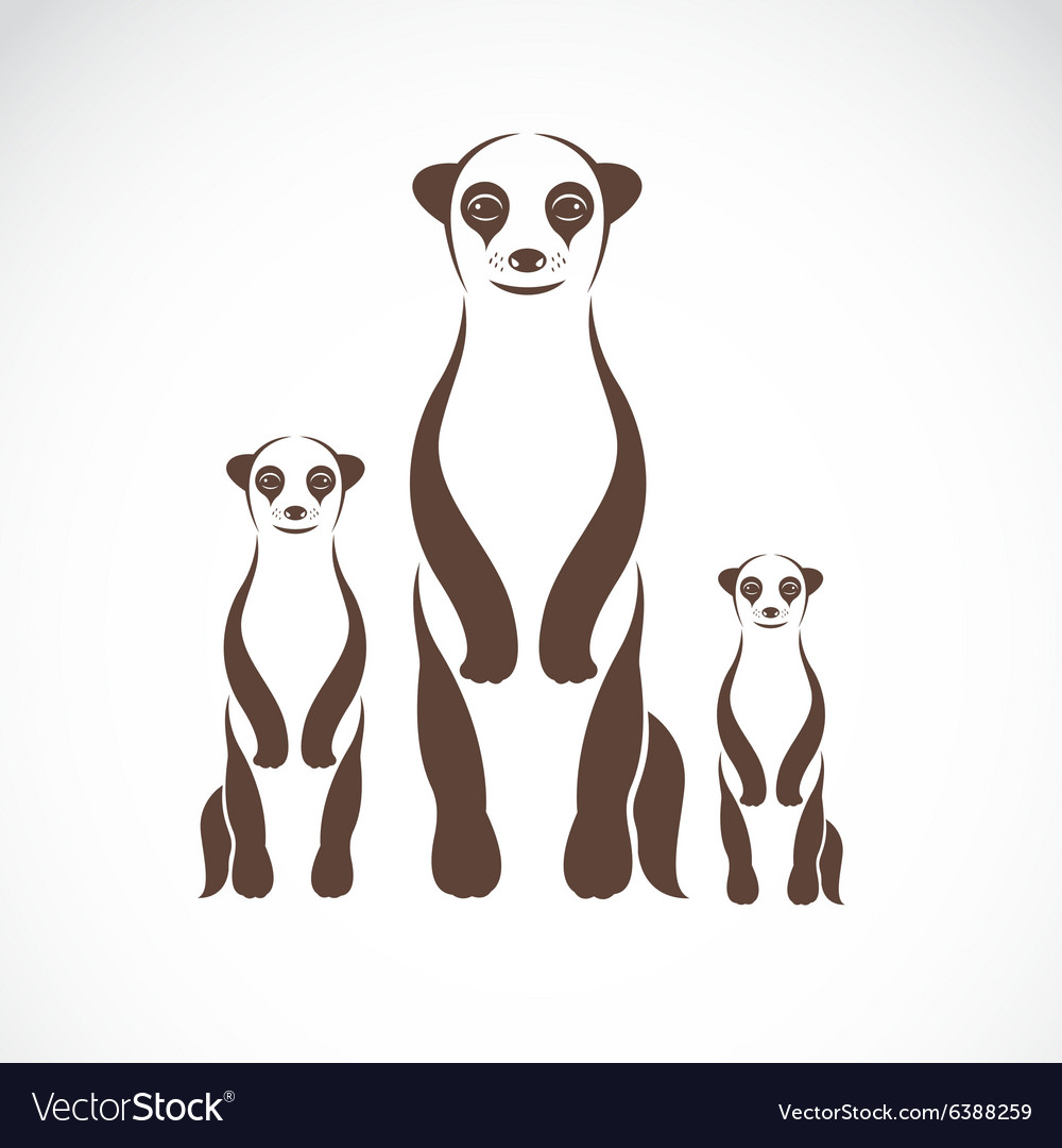 Image of an meerkats