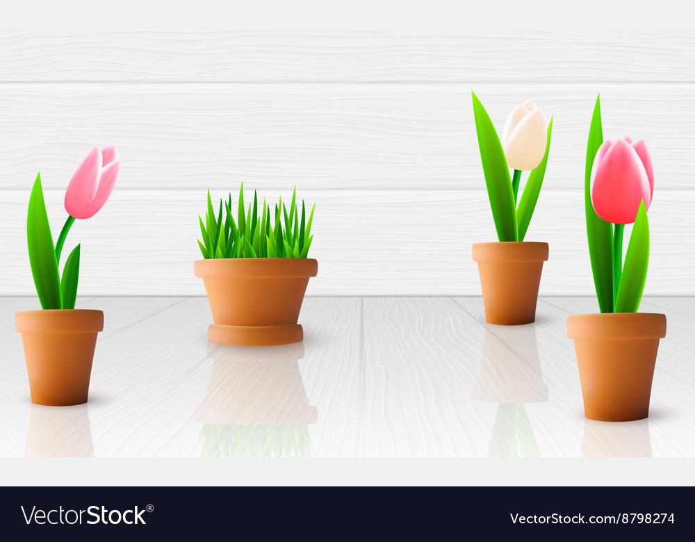 Beautiful tulip flowers