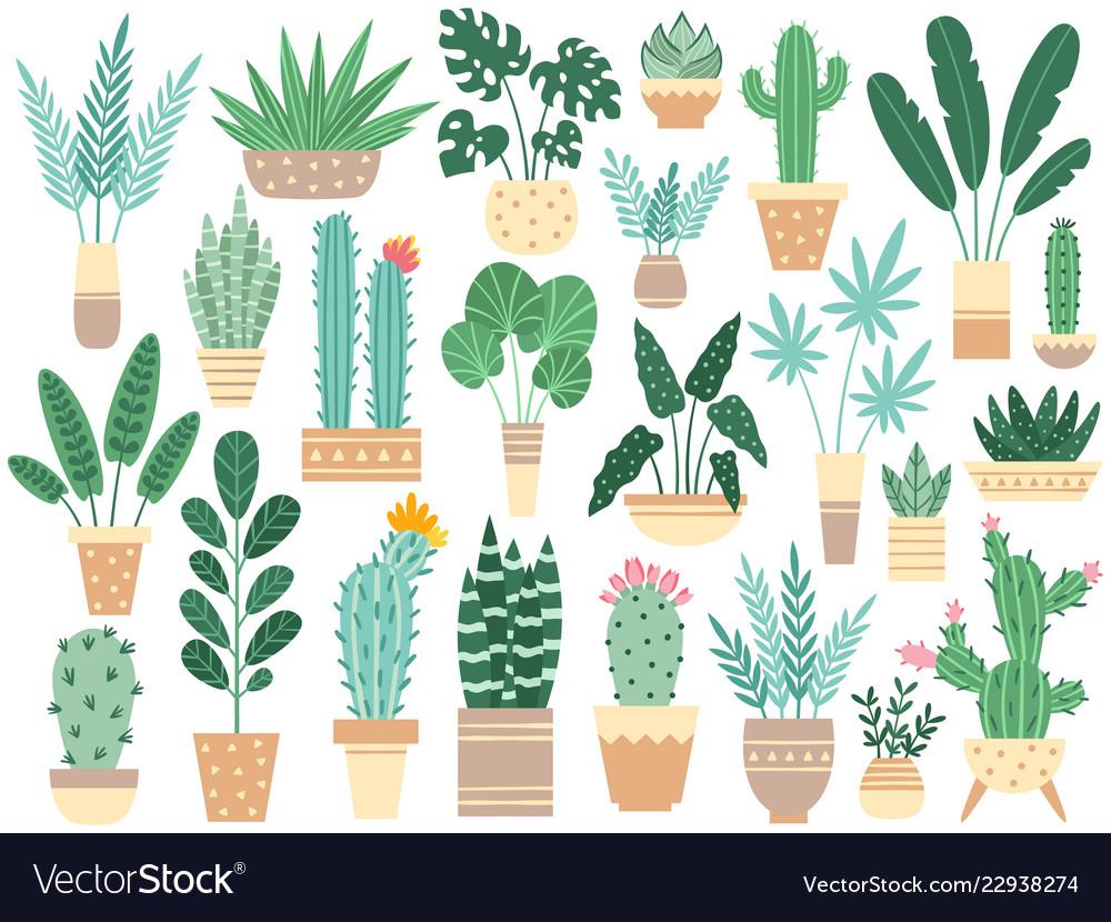 Home plants in pots nature houseplants