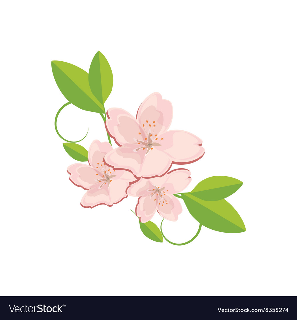 Sakura flower with leaves