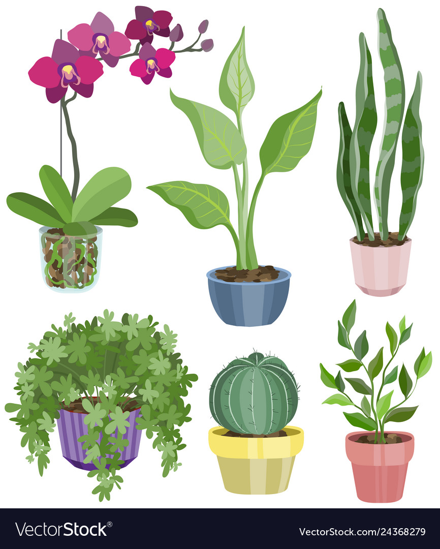 Set with flat flowers in pots vector image  sc 1 st  VectorStock & Set with flat flowers in pots Royalty Free Vector Image