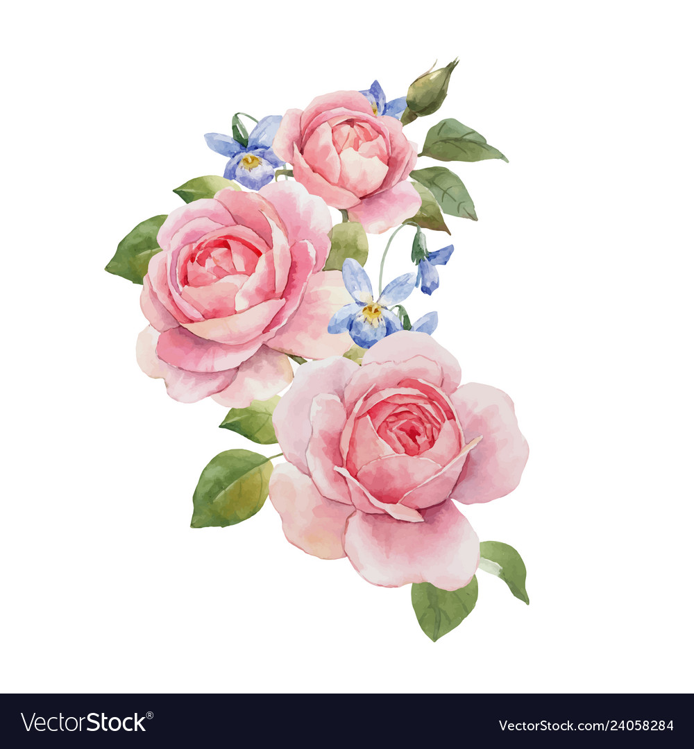 Watercolor rose omposition