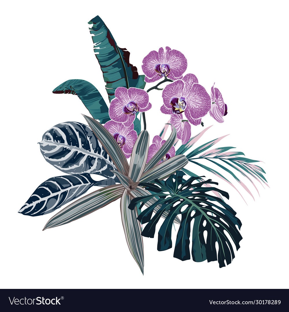 Botanical beautiful tropical flowers