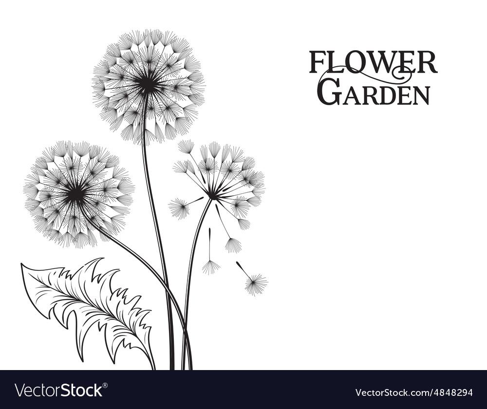 Blowball flower