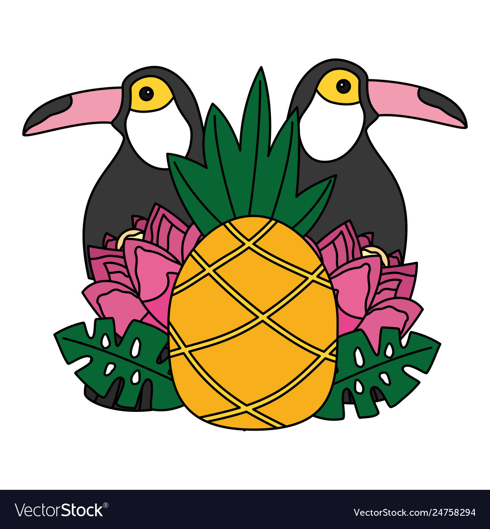 Toucan birds pineapple flower tropical summer