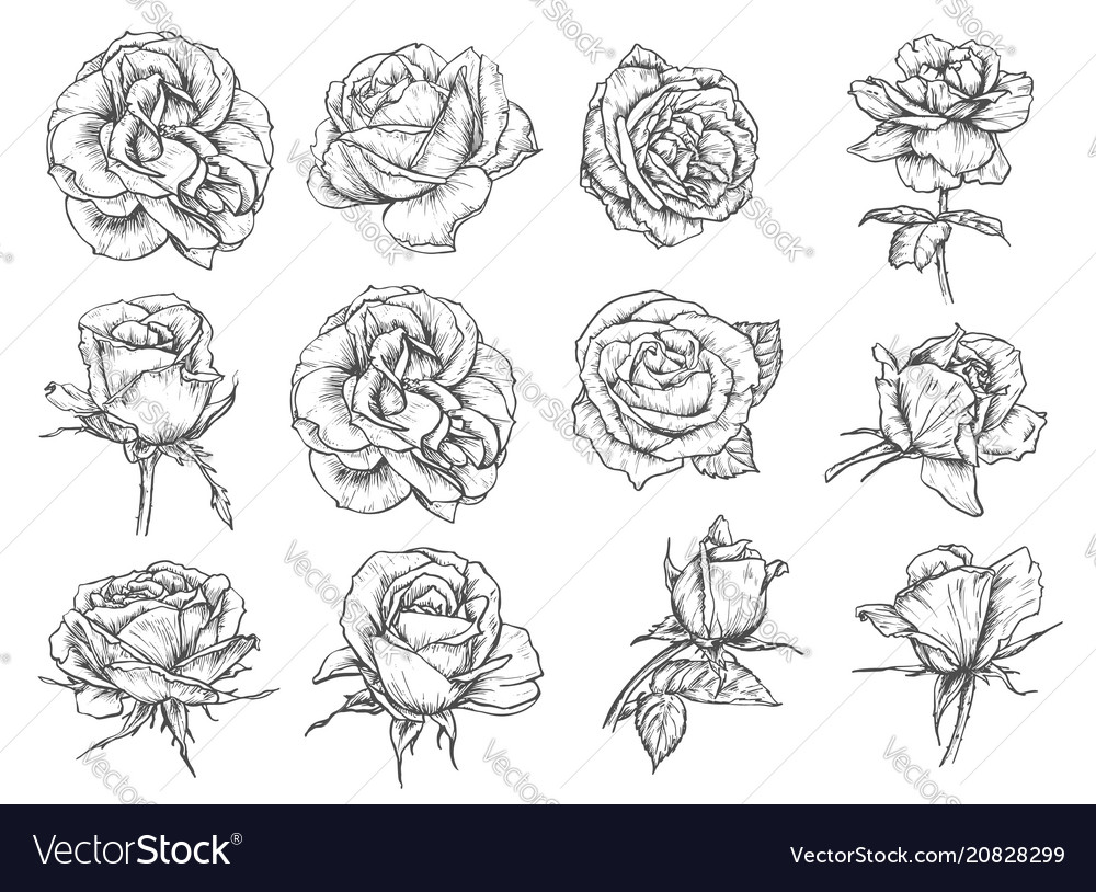 Flowers roses sketch icons
