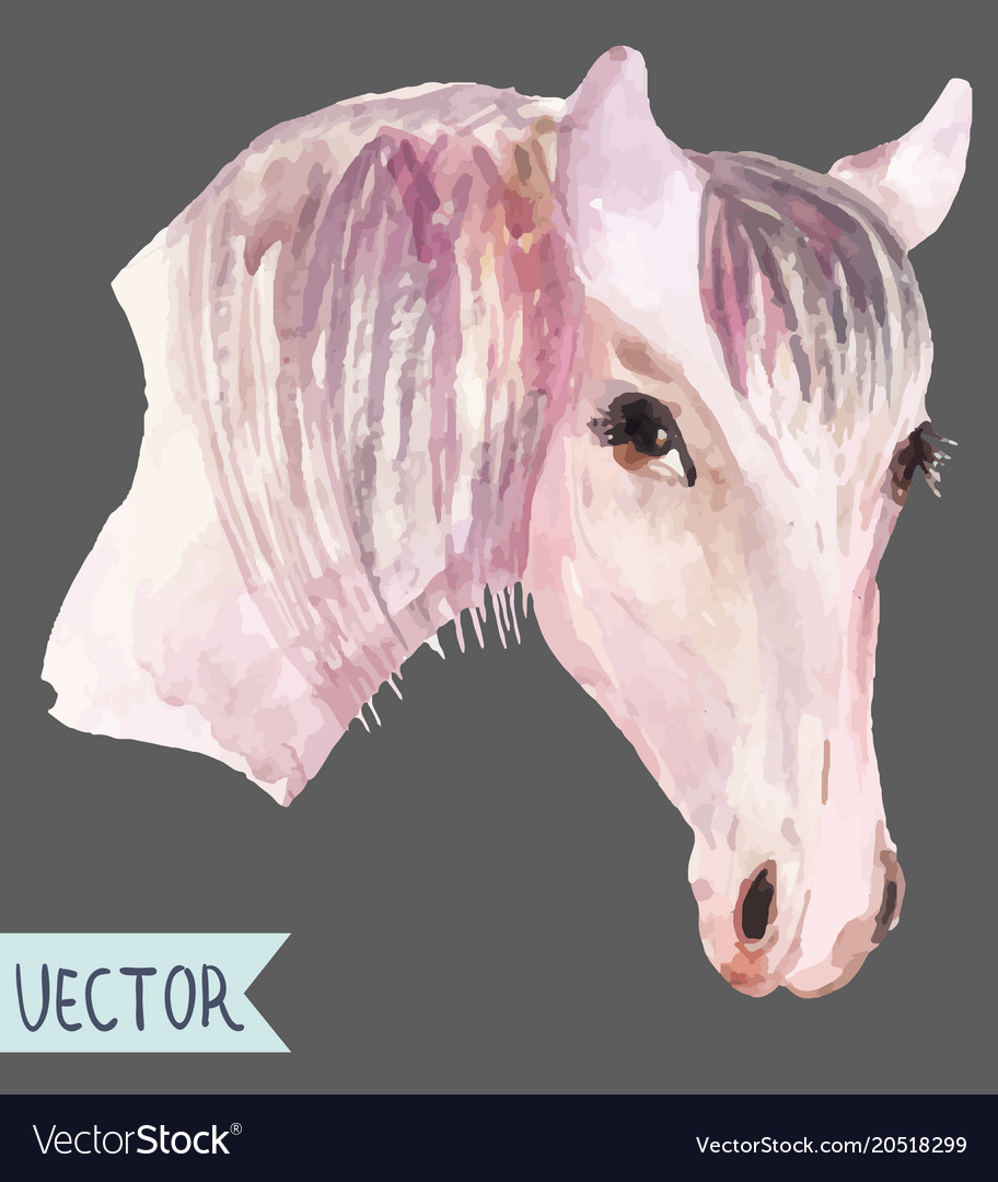 Watercolor Beautiful Horse Head Royalty Free Vector Image