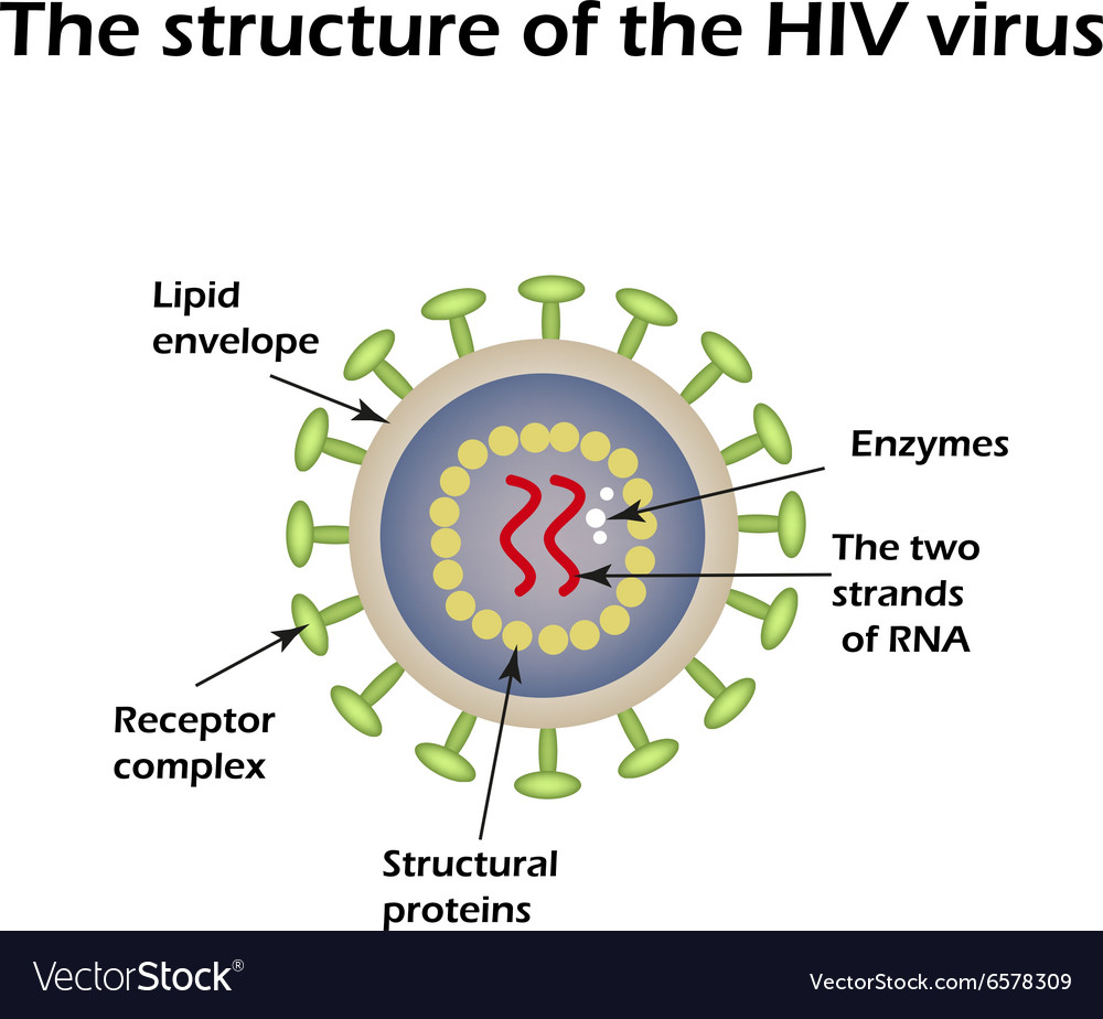 the structure of the aids virus hiv royalty free vector. Black Bedroom Furniture Sets. Home Design Ideas