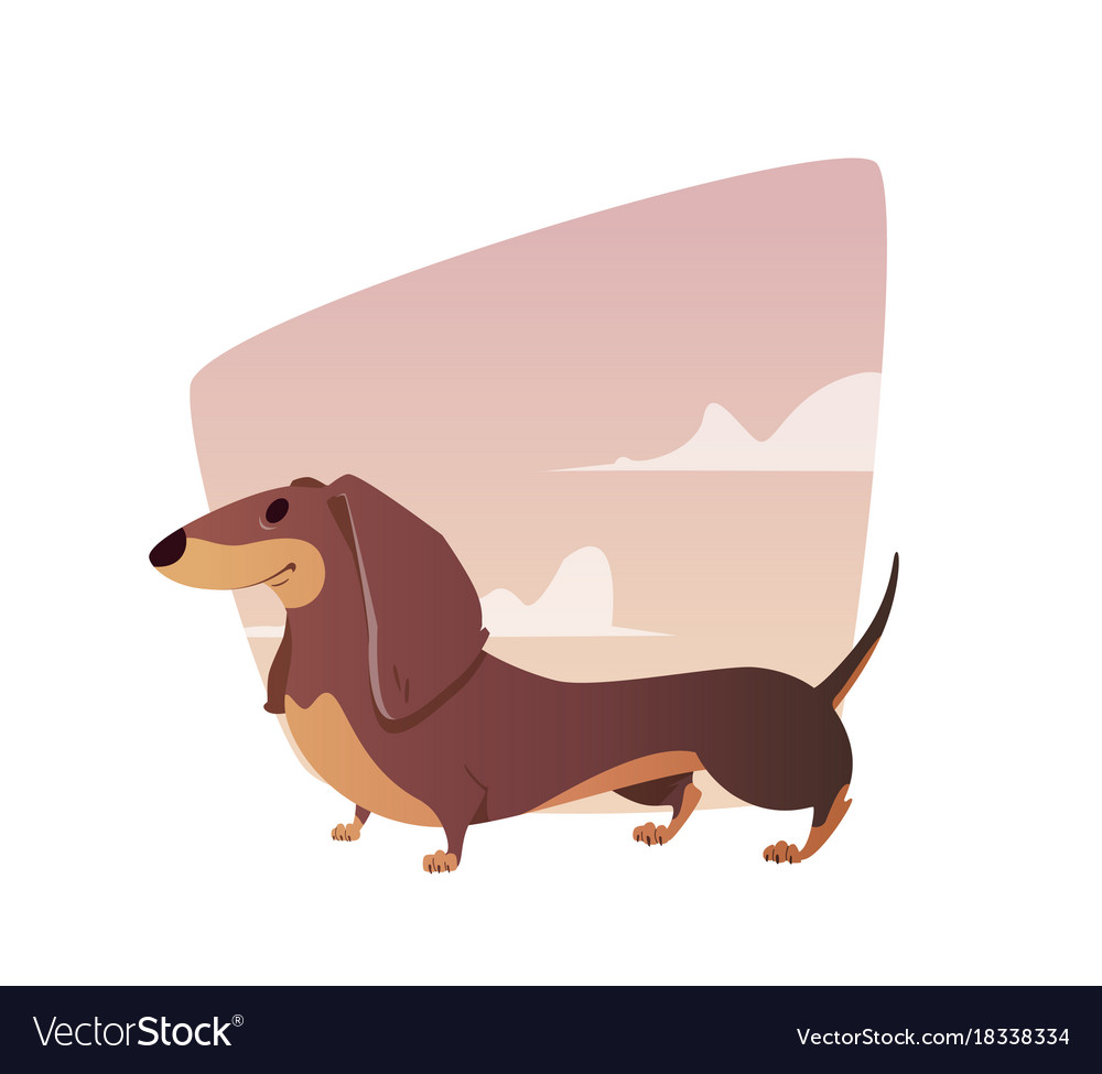 A vivid of the dachshund