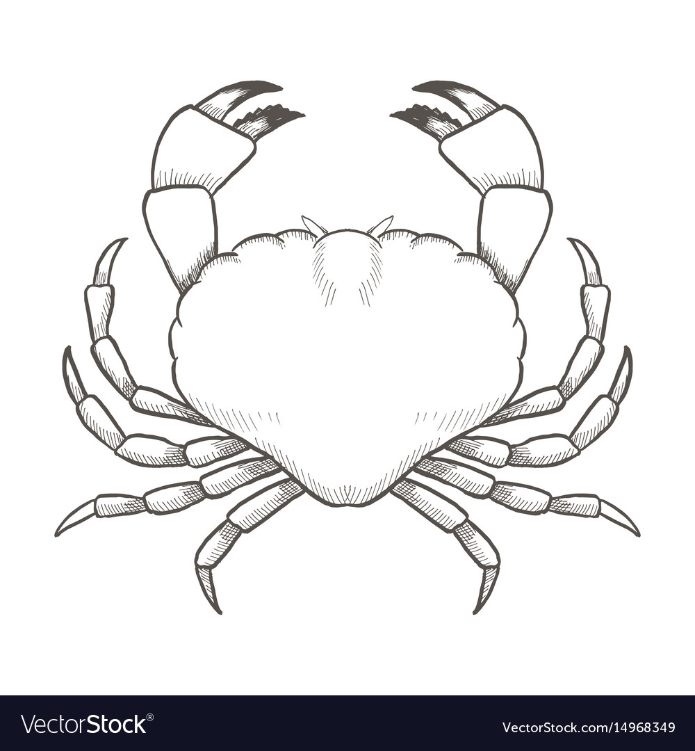 Crab drawing on white background hand drawn