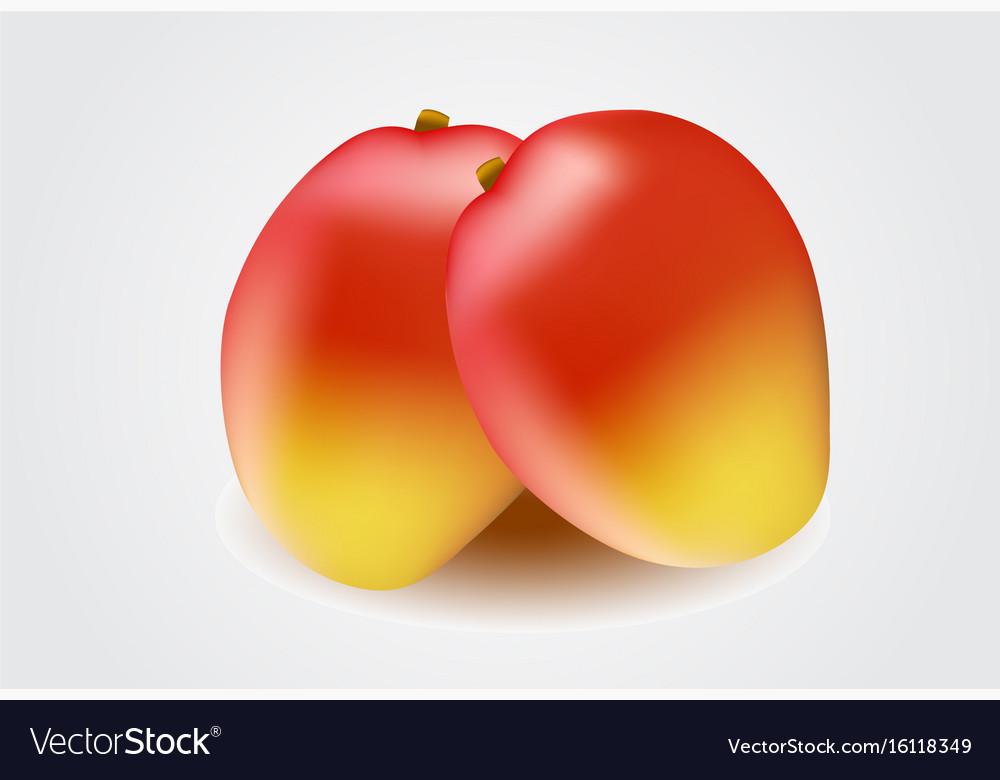 Mango fruit isolated on white background vector image