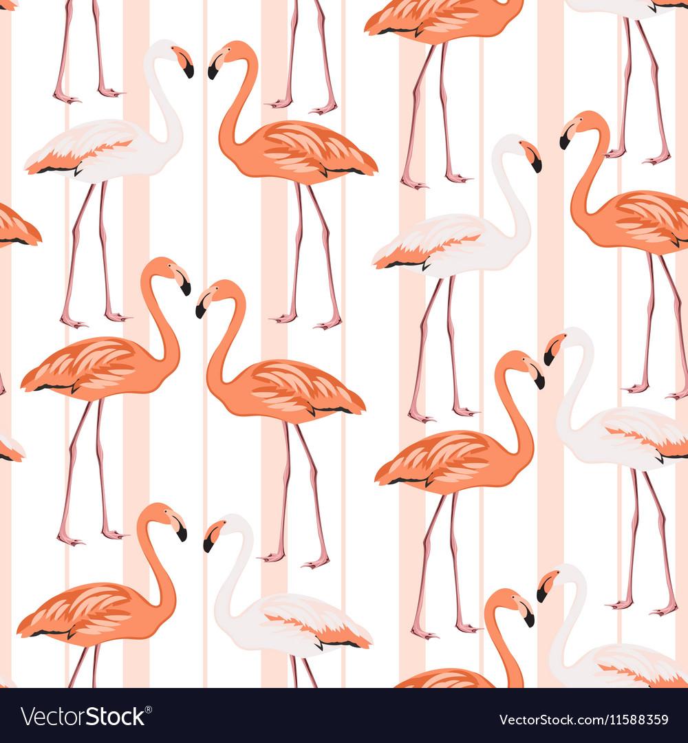 Exotic flamingo wading bird couples beak to beak vector image
