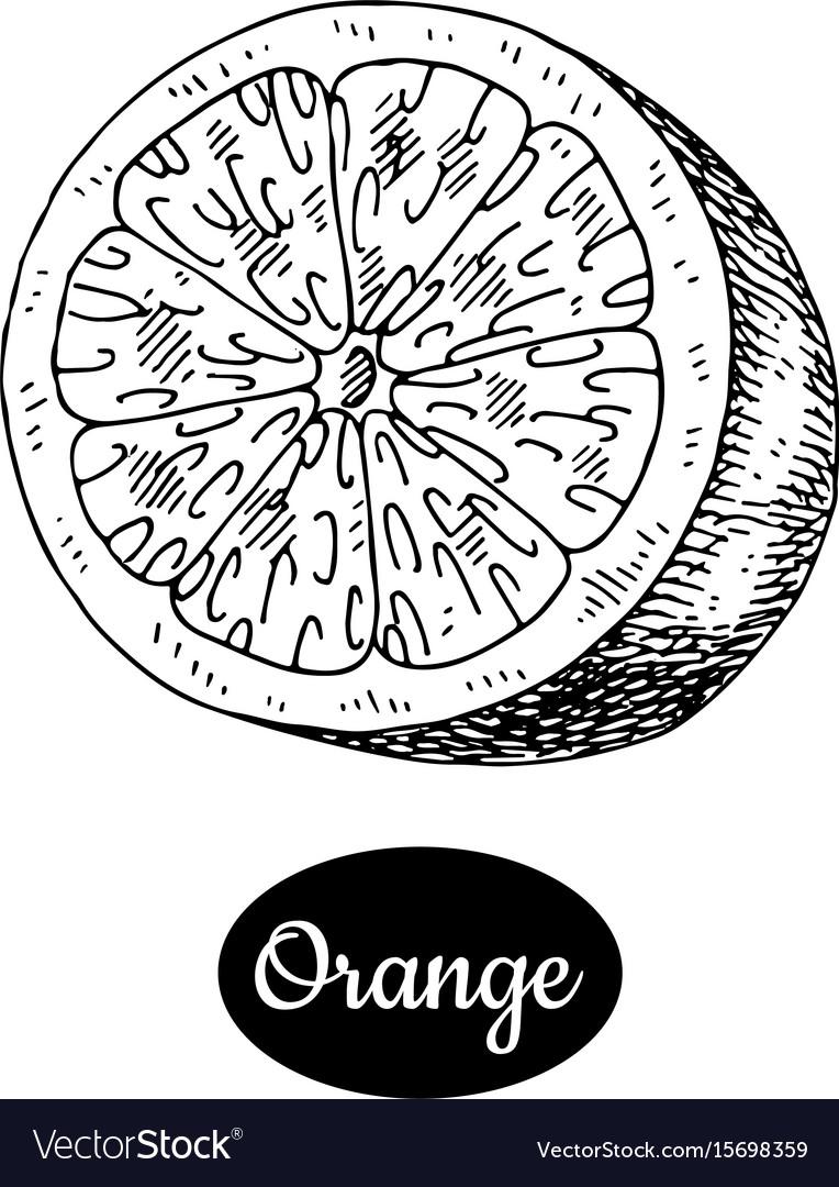 Hand drawn sketch style fresh orange