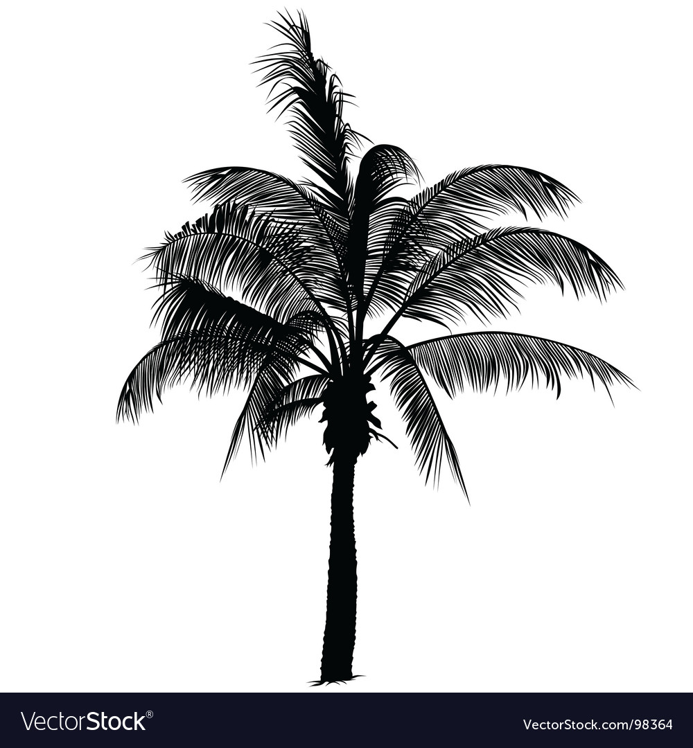 palm tree silhouette royalty free vector image rh vectorstock com Vector Palm Tree Silhouette SVG Files palm tree silhouette vector free