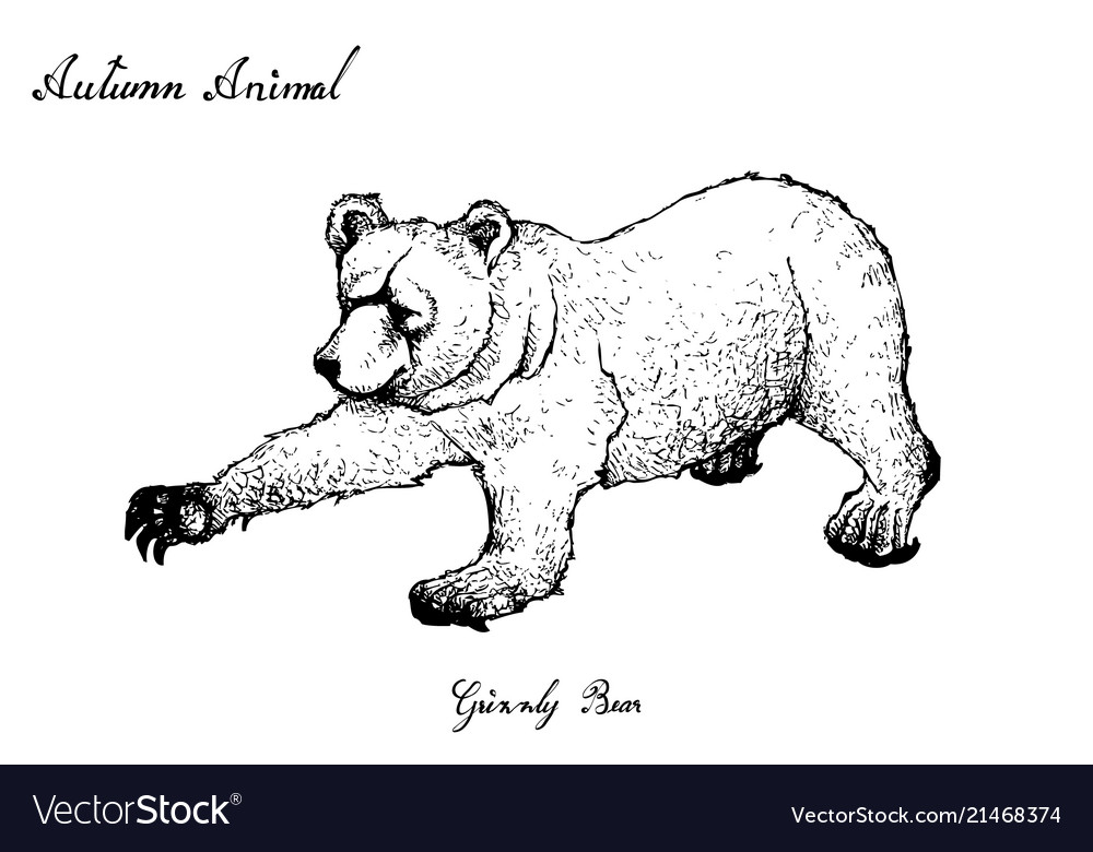 Autumn animal hand drawn of grizzly bear