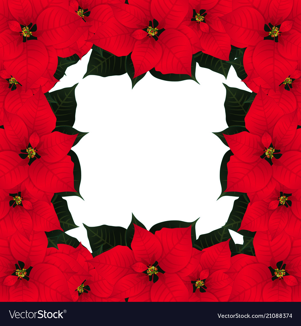 red poinsettia border vector image